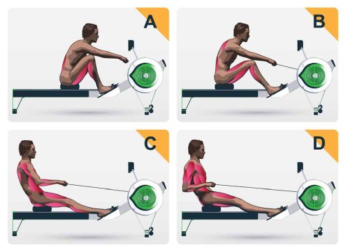 rowing session: on how rowing workouts tone your abs